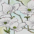 Dogwood Blossoms by Emily Page