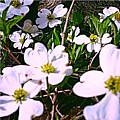Dogwood Blossoms Pair Up by Debra Lynch