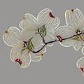 Dogwood Flowers 3 by Andrea Kappler