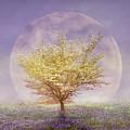 Dogwood In The Lavender Mist by Debra and Dave Vanderlaan