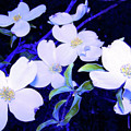 Dogwood Night Blooms by Shirley Moravec