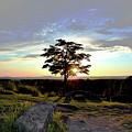 Dogwood On Little Round Top by Jen Goellnitz