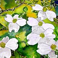 Dogwood Tree Flowers by Derek Mccrea
