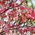 Dogwood Tree Landscape Art Prints Blue Sky Baslee Troutman by Baslee Troutman