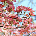 Dogwood Tree Landscape Pink Dogwood Flowers Art by Baslee Troutman
