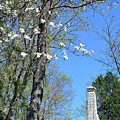 Dogwoods On Crest Of Kings Mountain National Military Park by Bruce Gourley