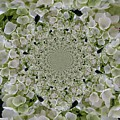 Doily Of Flowers by Barbara Griffin