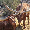 Doing The Watusi by Donna Kennedy