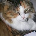 Dolly The Grumpy Cat by Corinne Elizabeth Cowherd