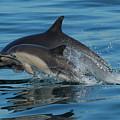 Dolphin Baby Flight by Laryssa Densmore