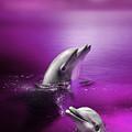 Dolphin Delights by Julie L Hoddinott