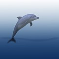 Dolphin In Ocean Blue by Movie Poster Prints