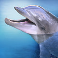 Dolphin In The Moonlight by Gail Shumway
