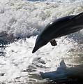 Dolphin Jump by Bibi Rojas