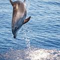 Dolphin Jump by Cory Huchkowski