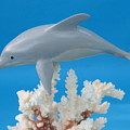Dolphin On Coral by Jack Murphy