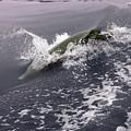 Runnin' Dolphin  by Dick Hopkins