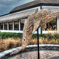 Dolphin Shell Art Sculpture by Greg Hager