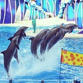 Dolphin Show by Monica Wellman