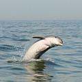Dolphin Splash by Terrie Stickle