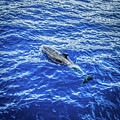 Dolphin Swimming Off Coast Of Lahaina Maui by Blake Webster