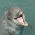 Dolphin by Sean M