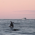Dolphins At Play by Robert Banach