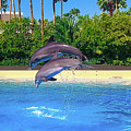 Dolphins Dance by Persephone Productions