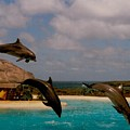 Dolphins Fly by Michael Bergman