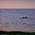 Dolphins by Paul Wilford