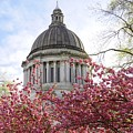 Dome And Cherry Blossoms by Patricia Strand