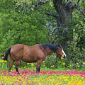 Domestic Horse In Field Of Wildflowers by Dave Welling