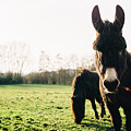 Donkey And Pony by Pati Photography