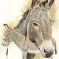 Donkey by Barbara Keith