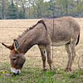 Donkey Finds Greener Grass by Catherine Sherman
