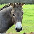 Donkey by Larah McElroy