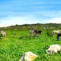 Donkeys Under A Blue Sky In Green Hills by Nika Lerman
