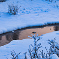 Donnelly Creek In Winter by Cathy Mahnke