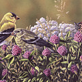 Don't Bug Us - Goldfinches Monarch Butterfly by Craig Carlson