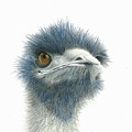 Dont Mess With Emu by Phyllis Howard