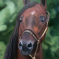 Dont Worry Saddlebred Sire by Donna Thomas