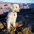 Doodle On Grand Canyon Rim by Cary Leppert