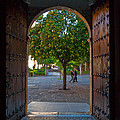 Doorway And Arch Between Gardens by Panoramic Images