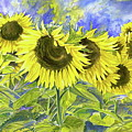 Dordogne Sunflowers by Dawn Thrasher