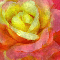 Dorie's Rose by Kim Groseclose