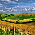 Dorset Farmland by David J Knight