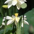 Double Blossom by Dawn Davis