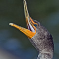 Double-crested Cormorant by Larry Linton