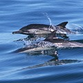 Double Dolphins And Reflections by Don Kreuter