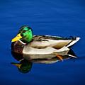 Double Duck by Rockybranch Dreams